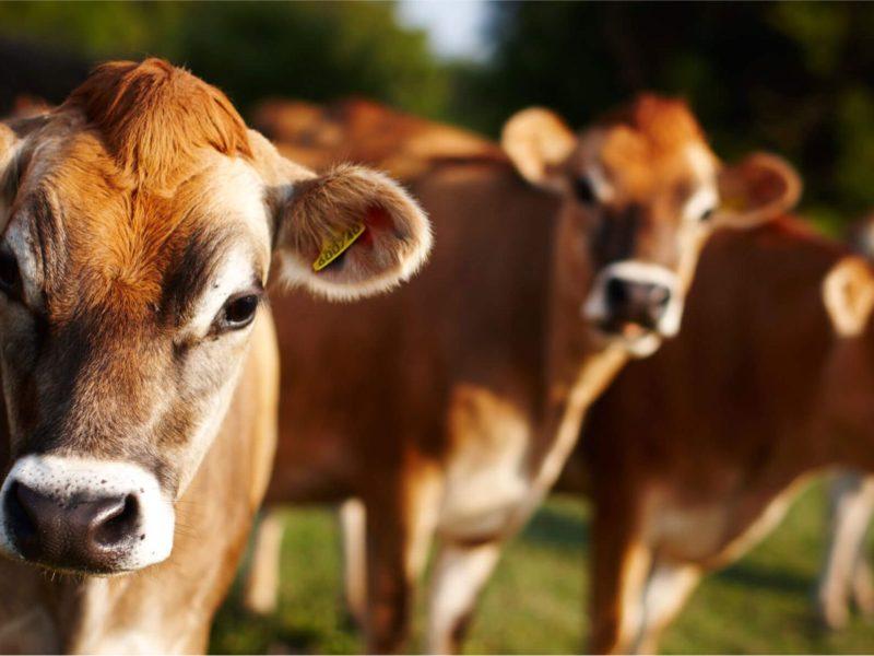 Prevenirea problemelor intestinale la om şi animale
